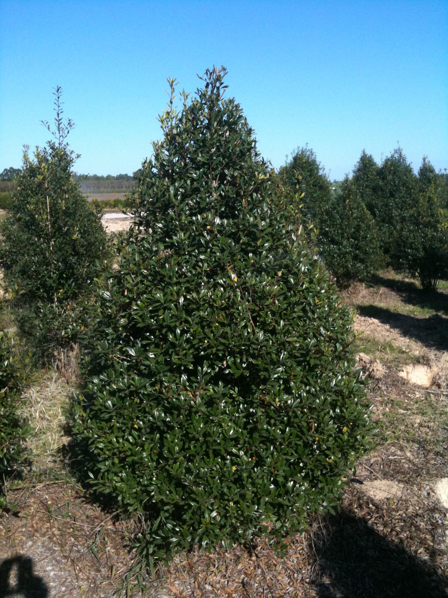 6 5 Ft Christmas Tree